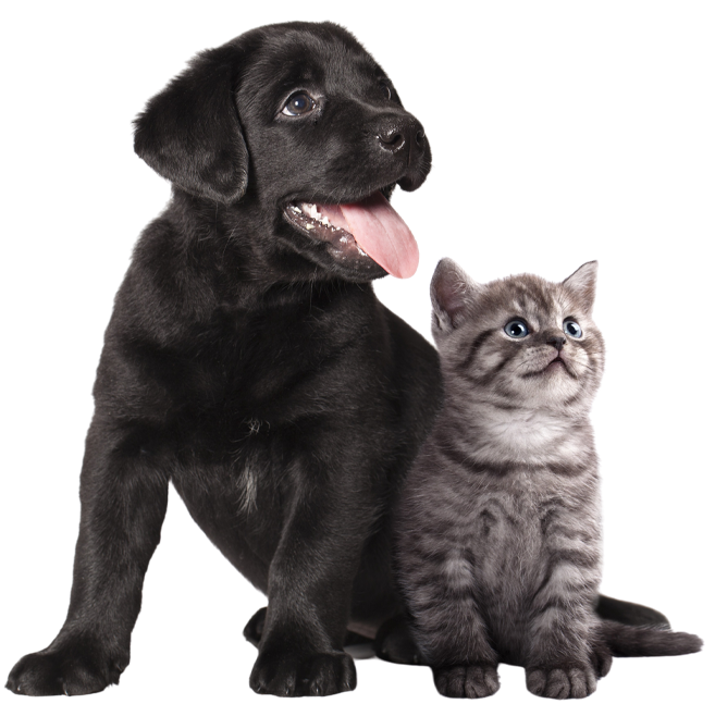 Psi nejsou celým naším životem, ale díky nim je náš život úplný.
